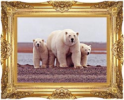 U S Fish And Wildlife Service Polar Bear Female With Cubs canvas with Majestic Gold frame