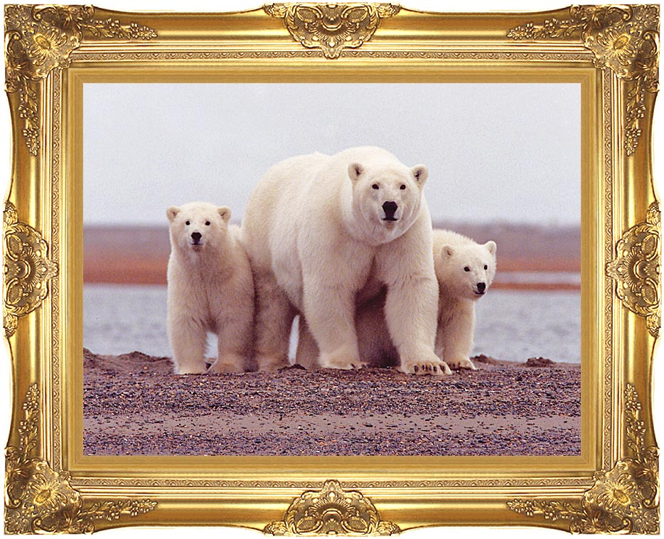 U S Fish and Wildlife Service Polar Bear Female with Cubs with Majestic Gold Frame