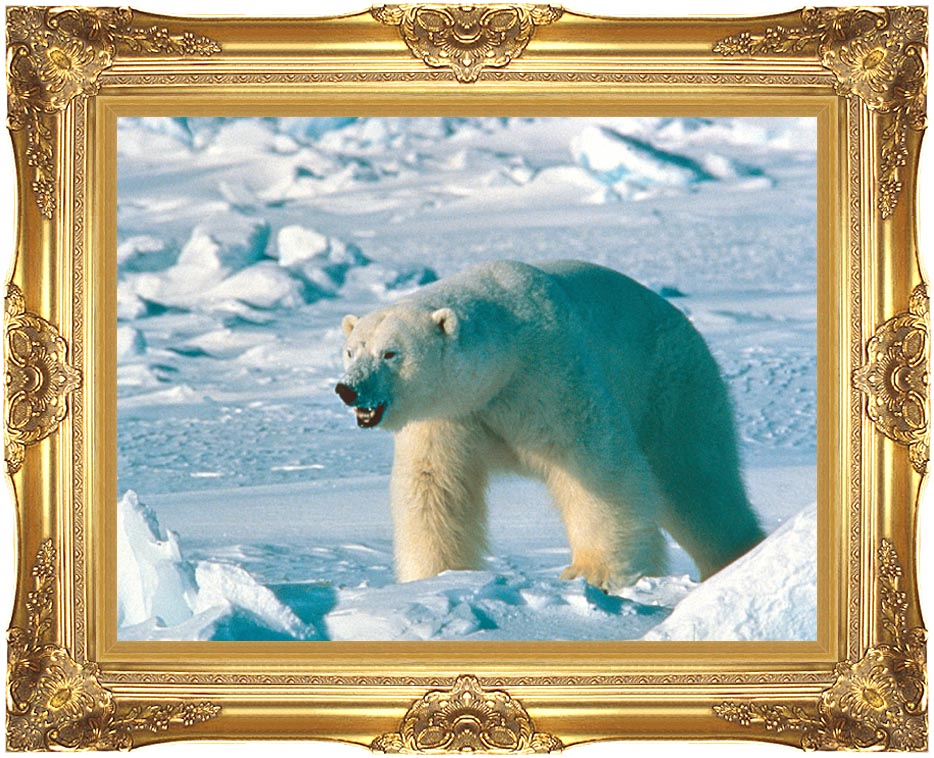 U S Fish and Wildlife Service Artic Polar Bear with Majestic Gold Frame