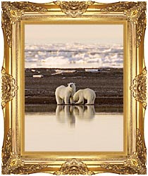 U S Fish And Wildlife Service Polar Bears canvas with Majestic Gold frame