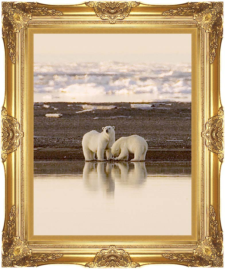 U S Fish and Wildlife Service Polar Bears with Majestic Gold Frame
