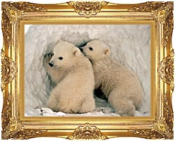 U S Fish And Wildlife Service Polar Bear Cubs canvas with Majestic Gold frame