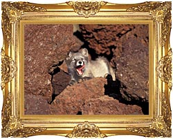U S Fish And Wildlife Service Arctic Fox canvas with Majestic Gold frame