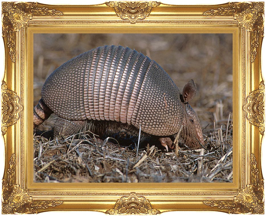 U S Fish and Wildlife Service Armadillo with Majestic Gold Frame
