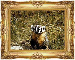 U S Fish And Wildlife Service Badger canvas with Majestic Gold frame
