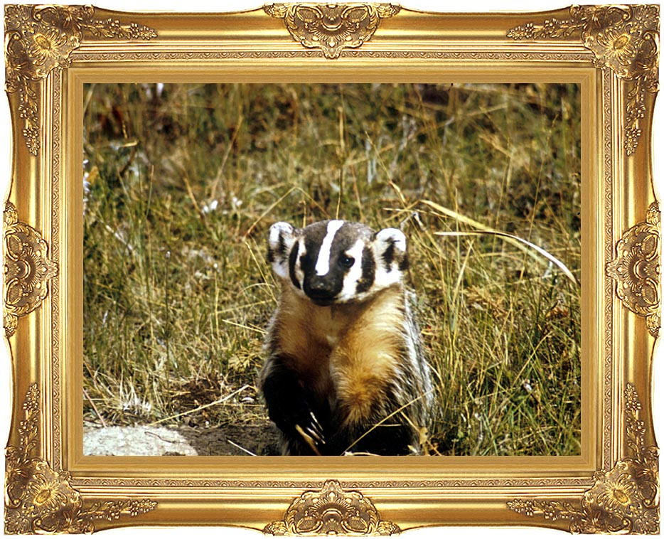 U S Fish and Wildlife Service Badger with Majestic Gold Frame