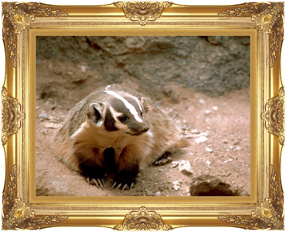 U S Fish and Wildlife Service Badger Art with Majestic Gold Frame