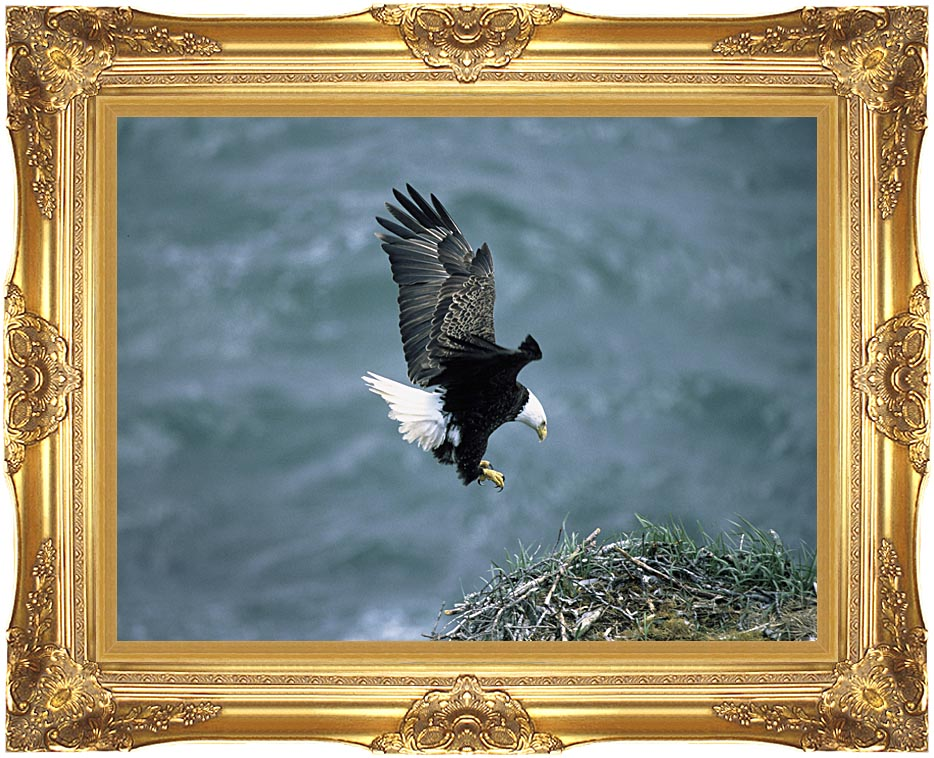 U S Fish and Wildlife Service Bald Eagle Landing on Nest with Majestic Gold Frame