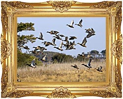 U S Fish And Wildlife Service Flock Of Waterfowl canvas with Majestic Gold frame
