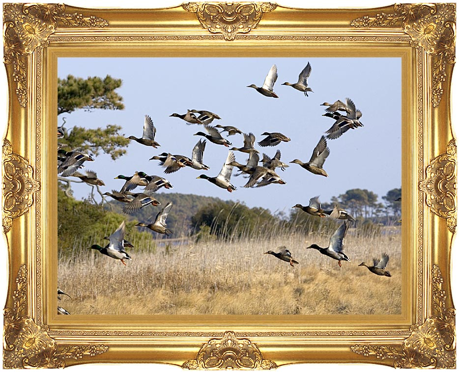 U S Fish and Wildlife Service Flock of Waterfowl with Majestic Gold Frame
