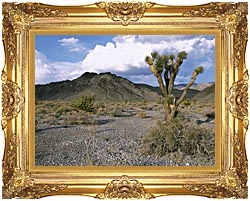 U S Fish And Wildlife Service Joshua Tree In The Desert canvas with Majestic Gold frame