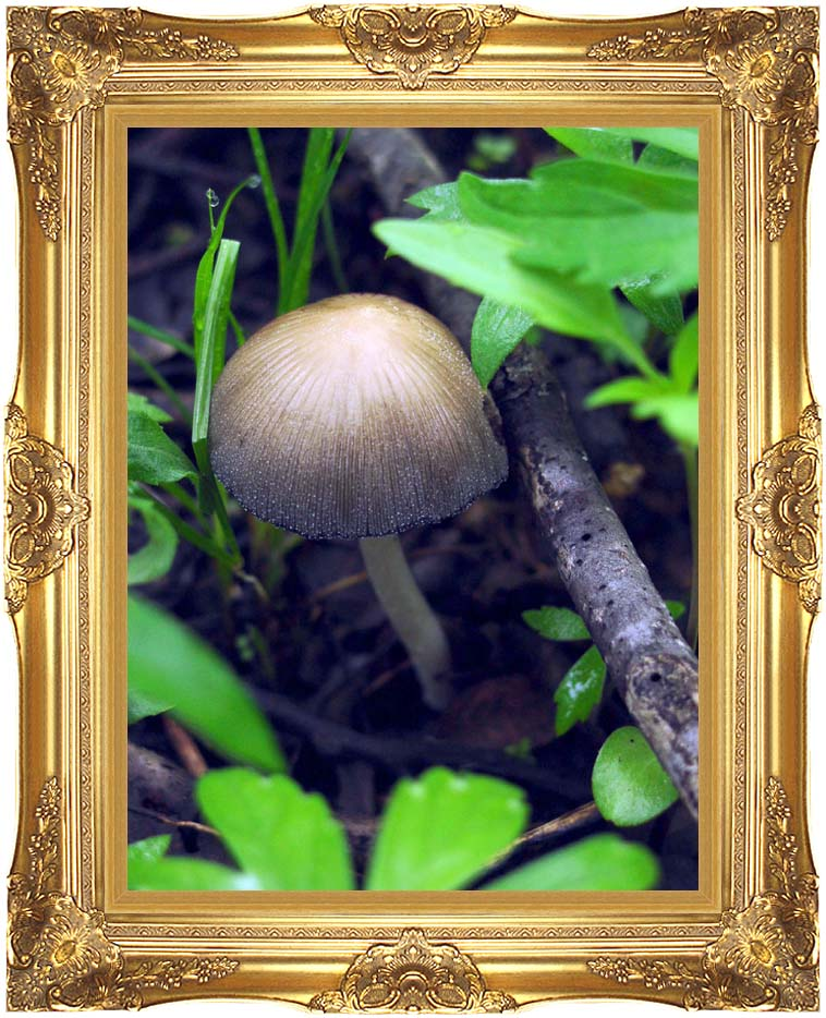 U S Fish and Wildlife Service Mica Cap Mushroom with Majestic Gold Frame