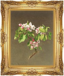 Martin Johnson Heade Apple Blossoms canvas with Majestic Gold frame