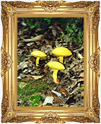 Ray Porter Yellow Bellys canvas with Majestic Gold frame