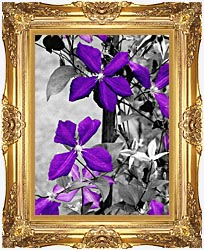 Ray Porter Purple Passion Black And White With Color canvas with Majestic Gold frame