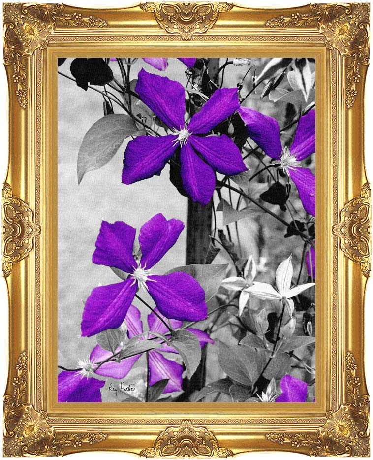 Ray Porter Purple Passion (Black and White with Color) with Majestic Gold Frame