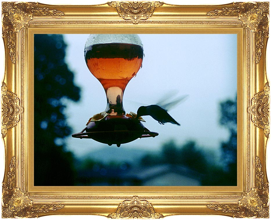 Ray Porter Hummingbird with Majestic Gold Frame
