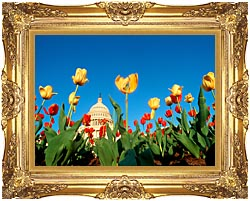 Visions of America Tulips In Spring With U S Capitol Building canvas with Majestic Gold frame