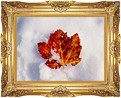 Visions of America Red Maple Leaf In Snow Acadia National Park Maine canvas with Majestic Gold frame