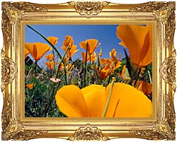 Visions of America Close Up Of California Poppies Blooming In Springtime canvas with Majestic Gold frame