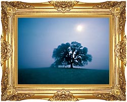 Visions of America Solitary Oak Tree On A Misty Morning California canvas with Majestic Gold frame