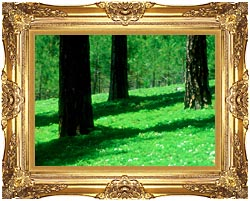 Visions of America Forest Floor At El Dorado National Forest California canvas with Majestic Gold frame