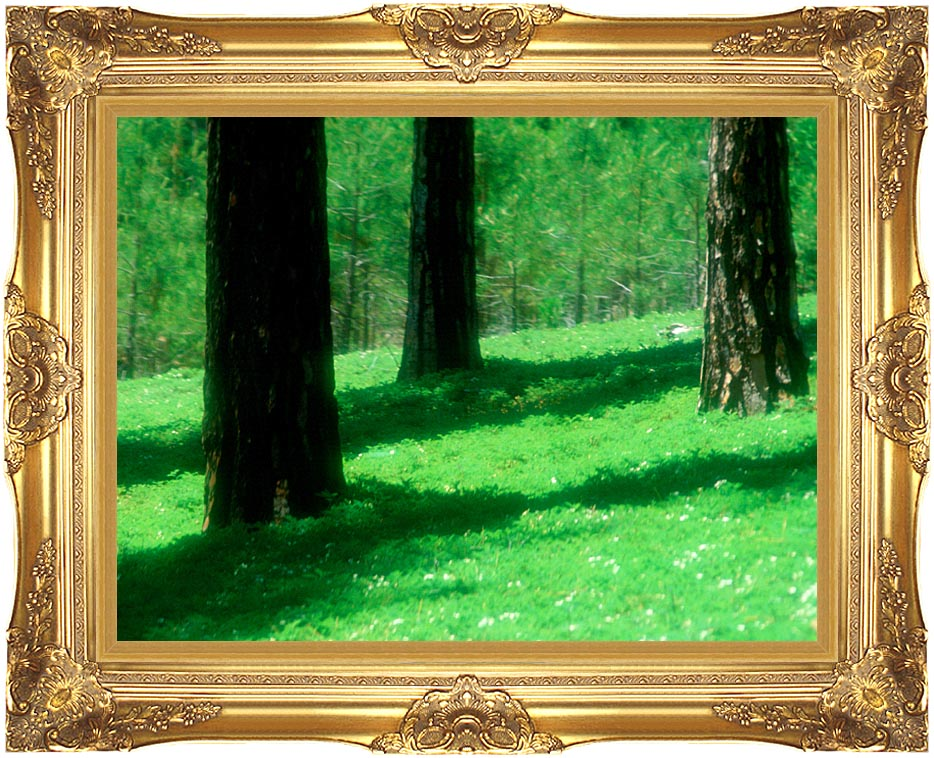 Visions of America Forest Floor at El Dorado National Forest, California with Majestic Gold Frame