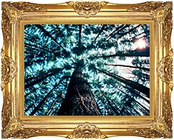 Visions of America Trees In Forest Saratoga New York canvas with Majestic Gold frame