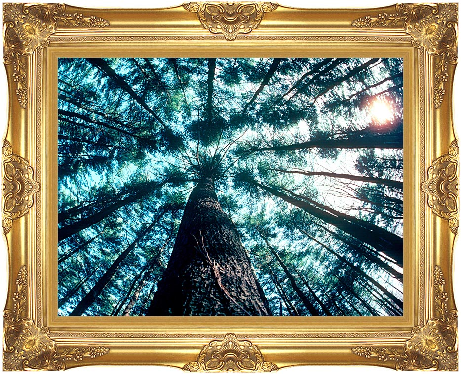 Visions of America Trees in Forest, Saratoga, New York with Majestic Gold Frame
