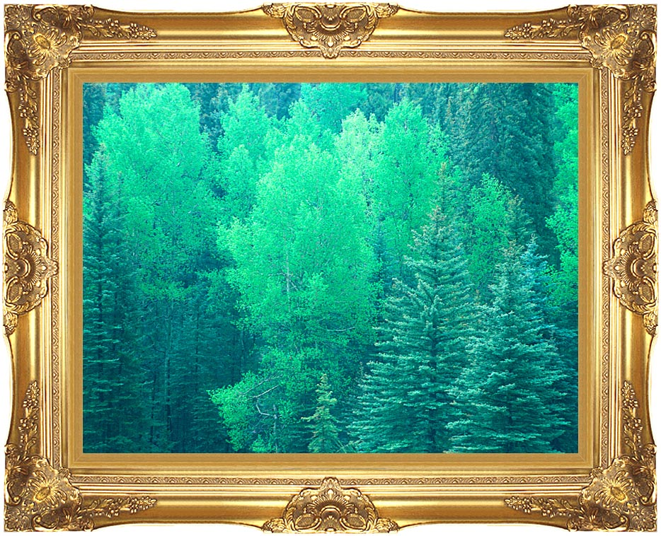 Visions of America Summer in Santa Fe National Forest, New Mexico with Majestic Gold Frame