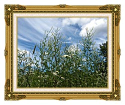Brandie Newmon Wild Flower Field In Easthampton Massachusetts canvas with museum ornate gold frame