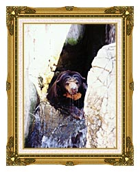 Brandie Newmon Sun Bear Cooling Off canvas with museum ornate gold frame