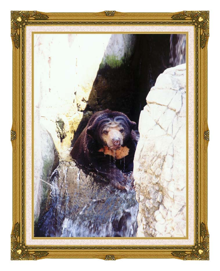 Brandie Newmon Sun Bear Cooling Off with Museum Ornate Frame w/Liner