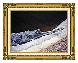 Brandie Newmon Gharial Crocodile canvas with museum ornate gold frame