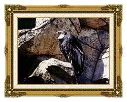 Brandie Newmon California Condor canvas with museum ornate gold frame