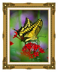 Brandie Newmon Yellow And Black Butterfly canvas with museum ornate gold frame