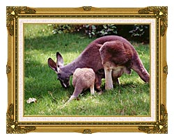 Brandie Newmon Wallaby Mother And Baby canvas with museum ornate gold frame