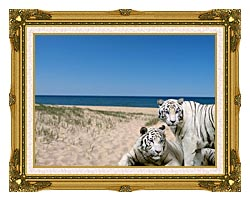 Brandie Newmon White Tigers At The Beach canvas with museum ornate gold frame