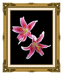 Brandie Newmon Stargazer Lily canvas with museum ornate gold frame