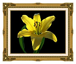 Brandie Newmon Asiatic Lily canvas with museum ornate gold frame
