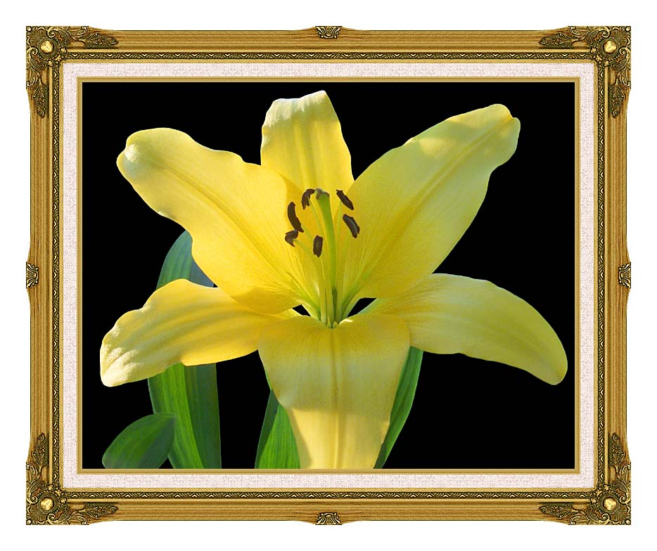 Brandie Newmon Yellow Lily Flower with Museum Ornate Frame w/Liner