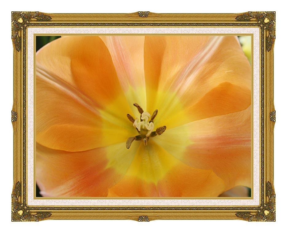 Kim O'Leary Photography Beautiful Orange Tulip with Museum Ornate Frame w/Liner