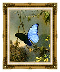 Martin Johnson Heade Blue Morpho Butterfly canvas with museum ornate gold frame