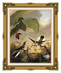 Martin Johnson Heade Black Eared Fairy canvas with museum ornate gold frame
