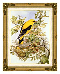 John Gould Golden Oriole canvas with museum ornate gold frame