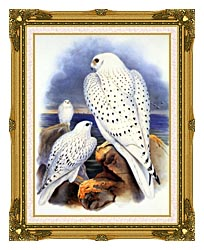 John Gould Gyrfalcon   Greenland Falcon canvas with museum ornate gold frame