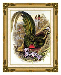 John Gould Quetzal canvas with museum ornate gold frame