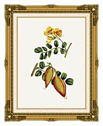William Curtis Bladder Senna canvas with museum ornate gold frame