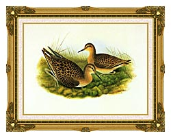 John Gould Ruff canvas with museum ornate gold frame