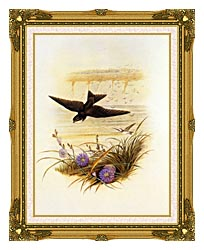 John Gould Sand Martin canvas with museum ornate gold frame